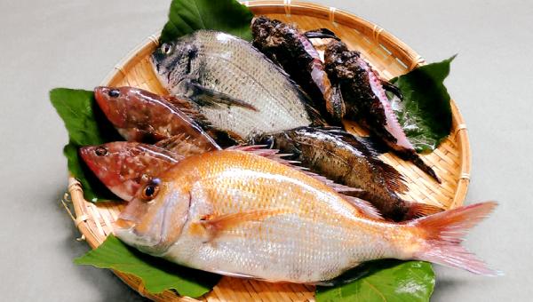 【漁港から直送】鮮魚セット